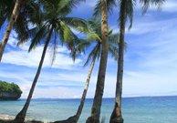 Ambon (Indonesia)