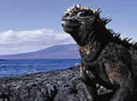 Baltra - Galápagos (Ecuador)