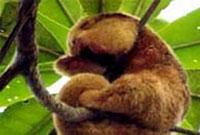 Curu (Costa Rica)