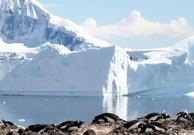 Isla Cuverville (Antártida)