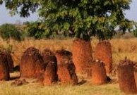 Kuntaur (Gambia)
