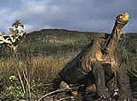 Las Bachas - Galápagos (Ecuador)