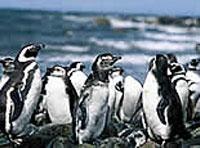 Navegación (Cabo de Hornos - Chile)