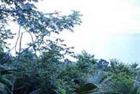 Puerto Caldera (Costa Rica)