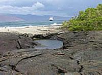 Punta Suárez - Galápagos (Ecuador)